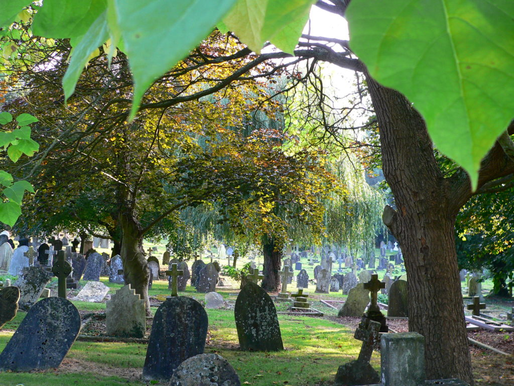 Cemetery wooded glade